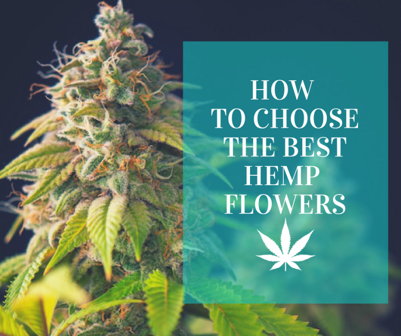 How to choose the best hemp flowers