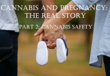 cannabis safety in pregnancy