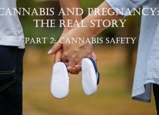 cannabis safety in pregnancy
