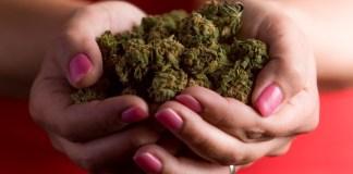 best hemp strains