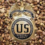 DEA_Stems_Seeds_CBD_Today
