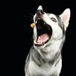 husky treat cbd today