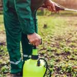 South-Carolina-Hemp-CBD-Pesticides-CBDToday