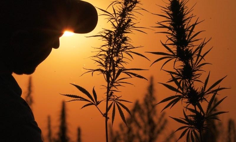 CBD Is Creating A Boom For Hemp Farmers