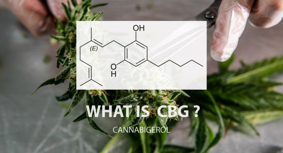 What Is CBG (Cannabigerol)?