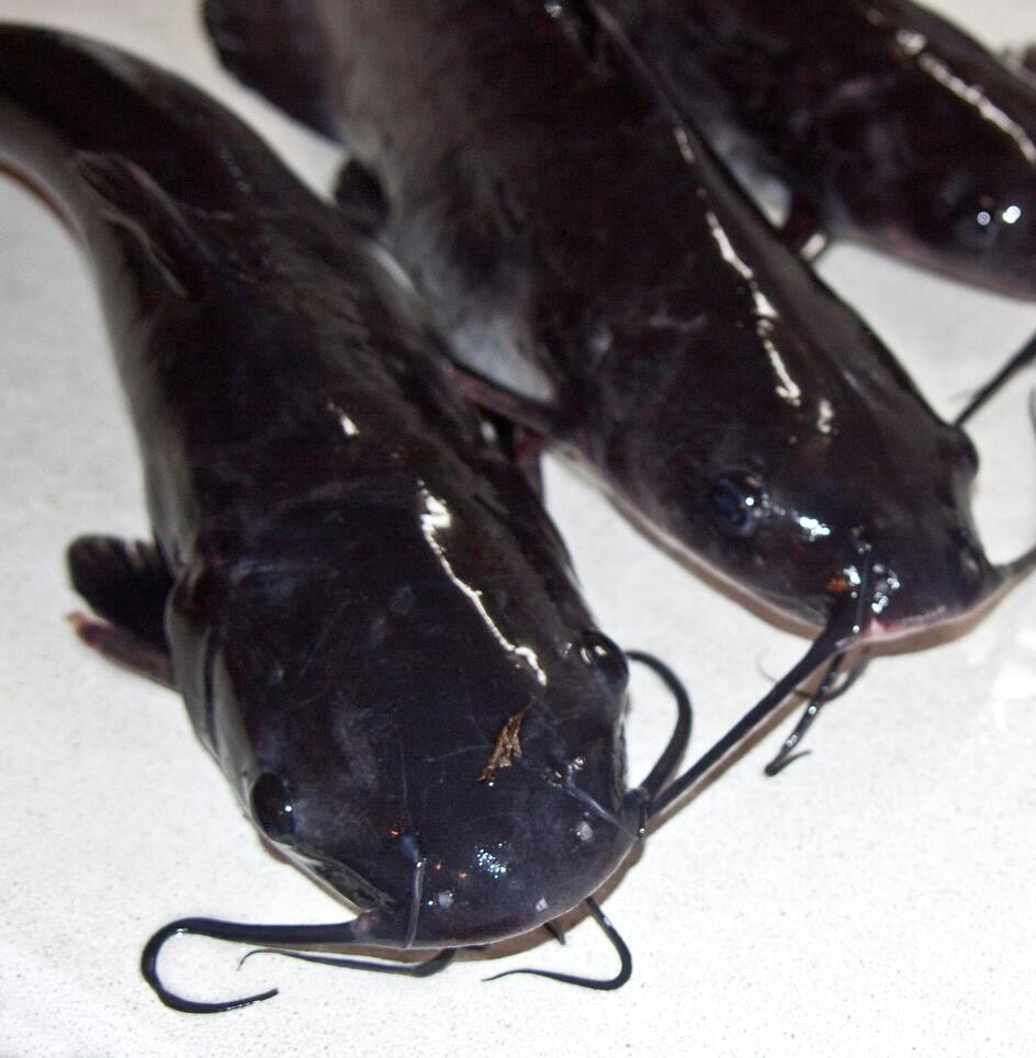 bif-aquaculture-market