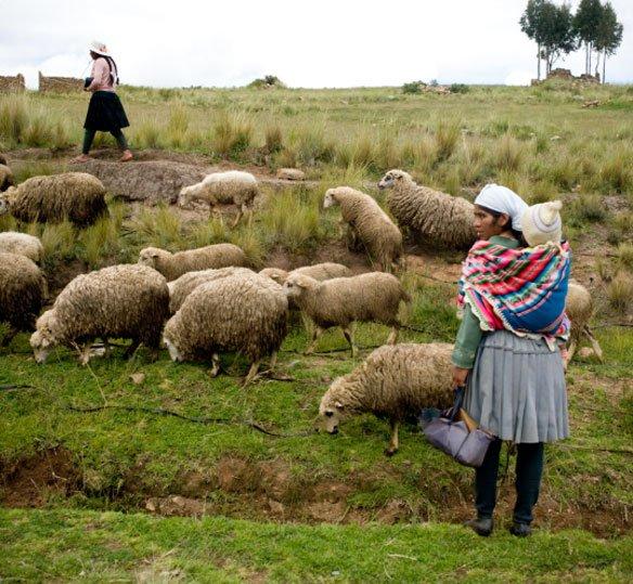 Photo of Bolivian woman herding sheep