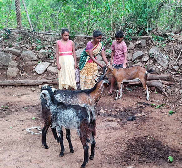 Photo of an Indian family tending to goats