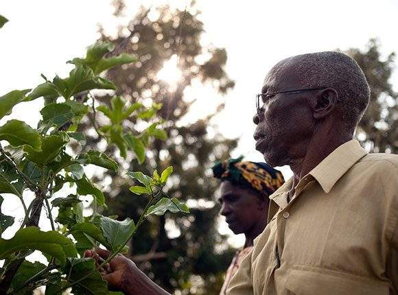 Photo of Kenyan man touching a plant