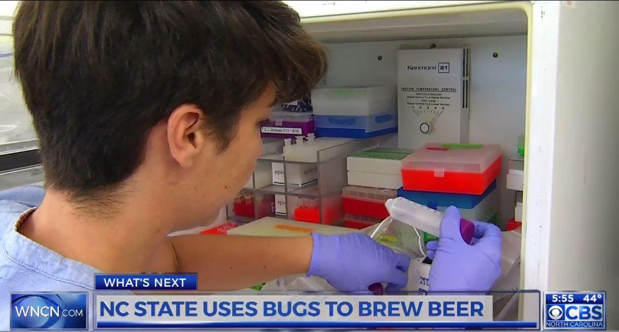 bugs-beer_295197