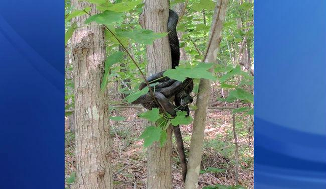 snakes tree nic bayer_433812