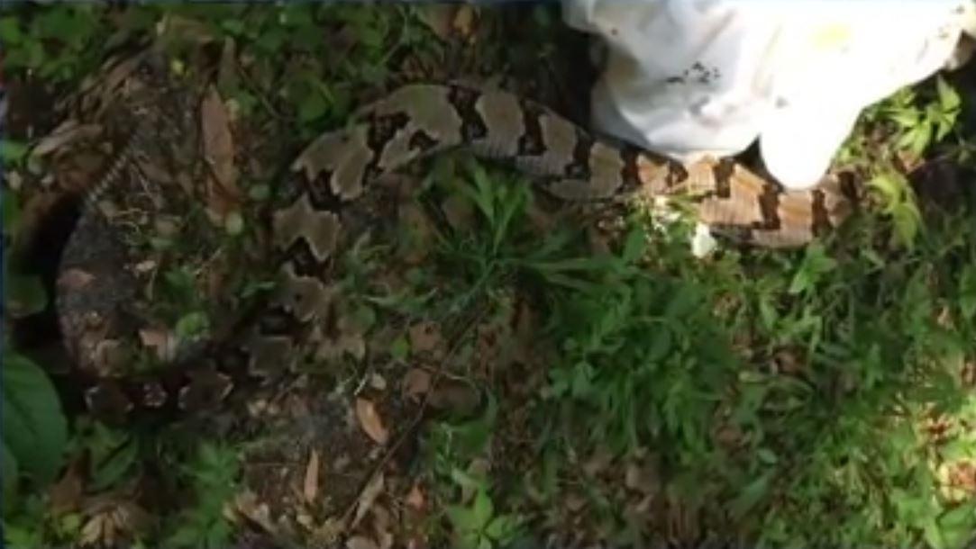 snake bite – CBS 17 com