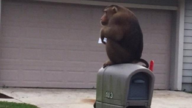 Monkey_122542