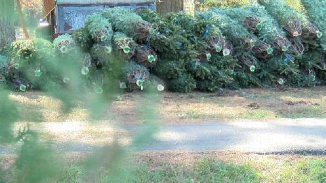 trees_136734