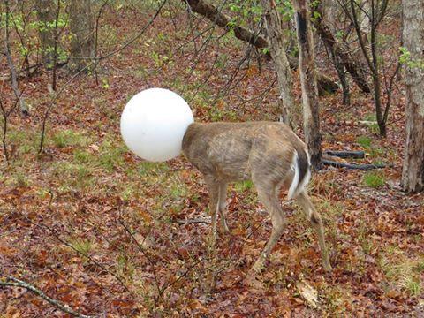 deer-1_169392