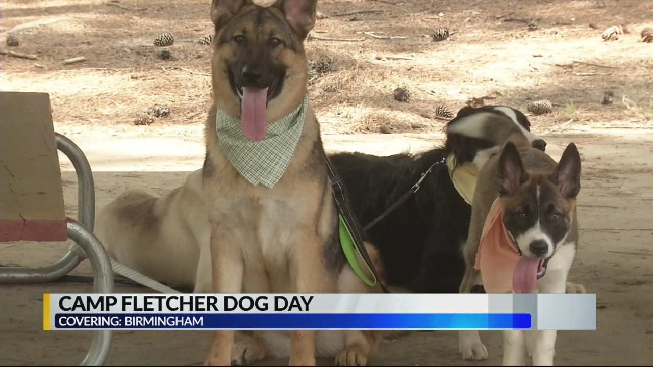 Camp Fletcher Dog day