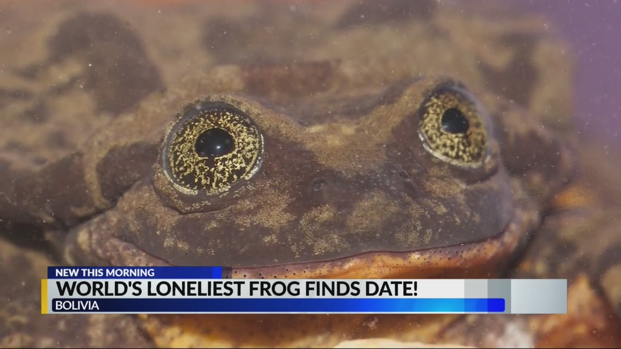 Meet Romeo, one of the last Water Frog