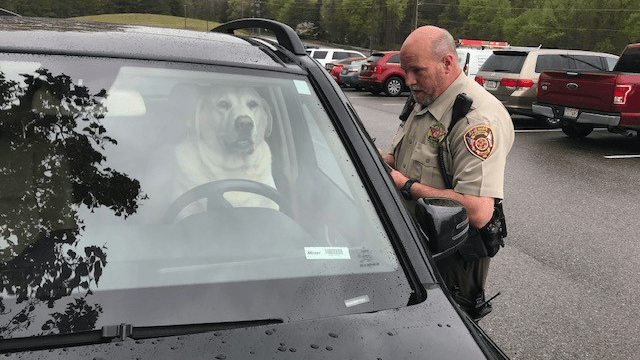 Shelby County dog arrested -lol_1554753866107.png.jpg