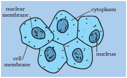 Cell  Structure And Functions CBSE Science Class 8 Chapter Wise Solved Q&A