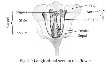 NCERT Solutions for Class 10 Science Chapter 8 How do Organisms Reproduce 1