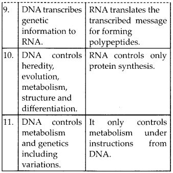 NCERT Solutions for Class 12 Chemistry Chapter 14 Biomolecules 13