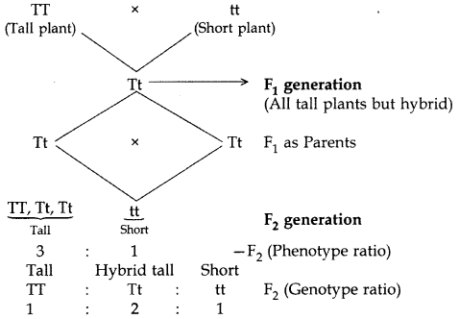 Heredity and Evolution Class 10 Important Questions with Answers Science Chapter 9, 7