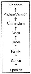 NCERT Solutions for Class 11 Biology Chapter 1 The Living World image 2
