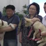 Video: Rusos obtuvieron dos perros por clonación