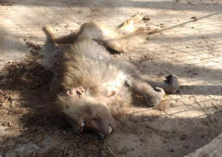 Abandonan animales en zoológico de Reynosa