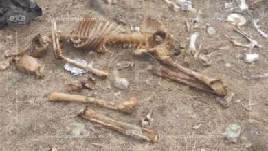 Localizan restos óseos en una brecha de Las Tortugas
