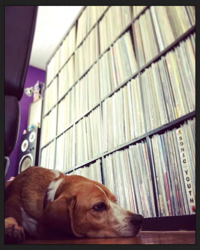 chien d'eric et disques vinyles