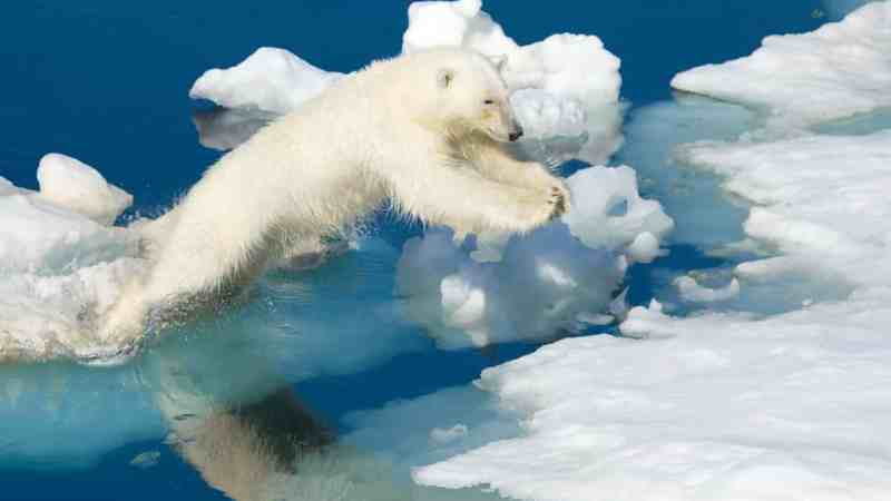 Arctic warming: scientists alarmed by 'crazy' temperature rises