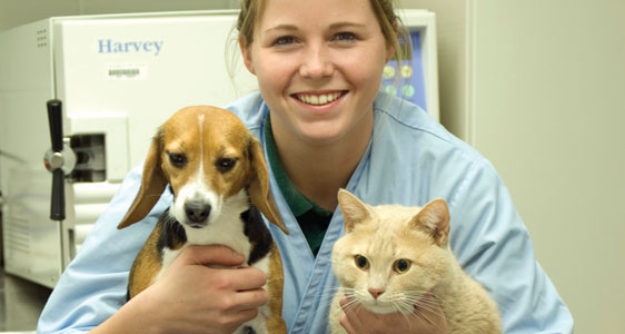 College for veterinary technician