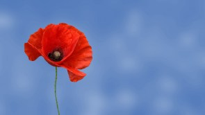Religious conscience and tall poppy syndrome