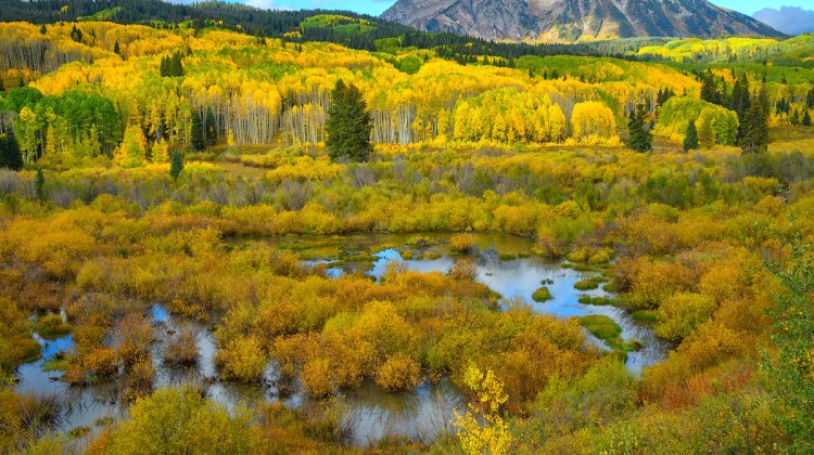 Fall Colors in Colorado 2021