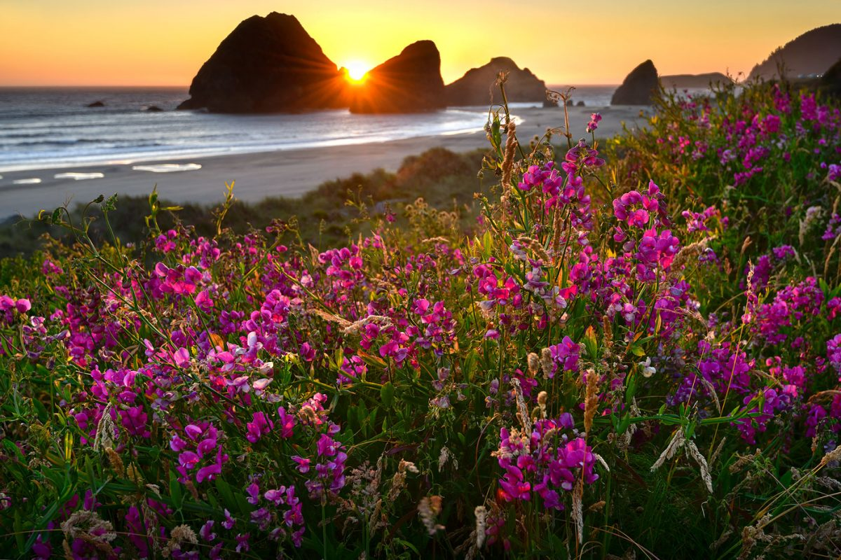 Highlights of the Oregon Coast 2021
