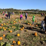 Students at the pumpkin patch