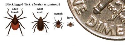 Image showing blacklegged tick adult female, adult male, nymph, and larva