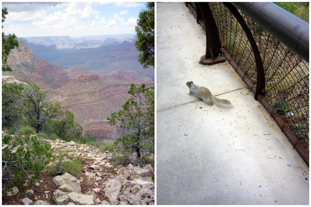 ecureuil grand canyon