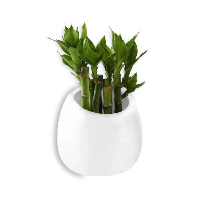 pot pour plantes mural blanc 10cm ceramique decor