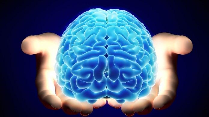 brain-transplants-merl.jpg