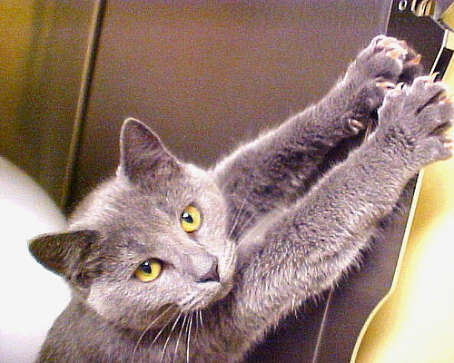 Image result for scratching and clawing