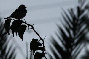uccellino in conrtoluce