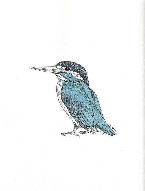 """Martin-pêcheur. Illustration pour la revue """"Universitas"""" (Université de Fribourg, Suisse), septembre 2015"""