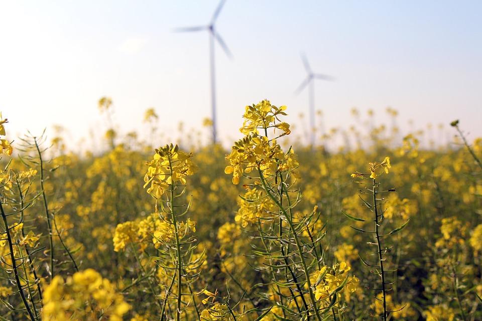 wind-field