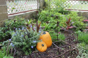 pumpkin_garden
