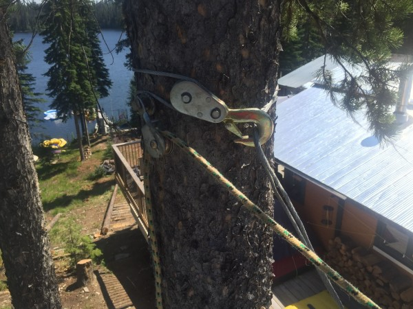 winch in tree