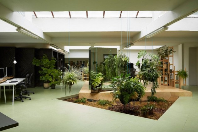 Indoor Plants 08
