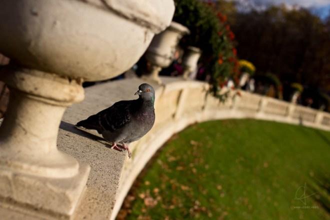 Conversations avec un pigeon