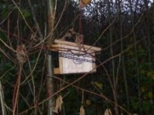 4.Dormouse_box